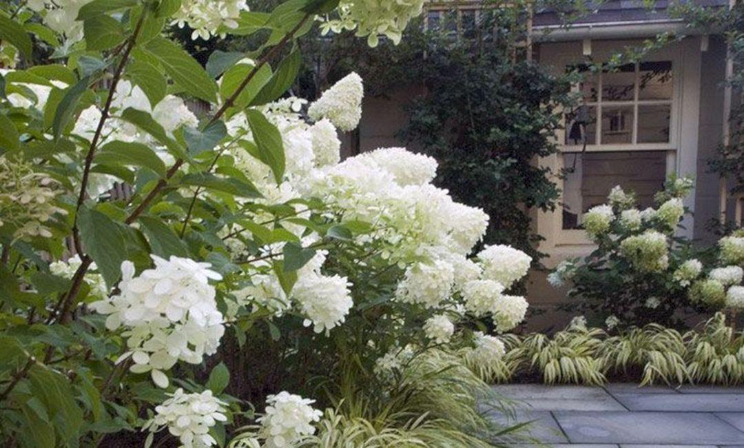 25 awesome white garden ideas with white flower collection in your 25 awesome white garden ideas with white flower collection in your garden freshouz mightylinksfo Choice Image